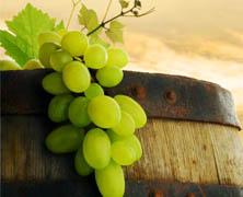 智利 酒 – 2013春节葡萄酒消费前瞻